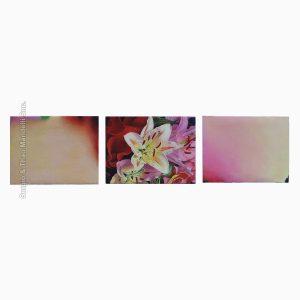 Triptych – Lilium